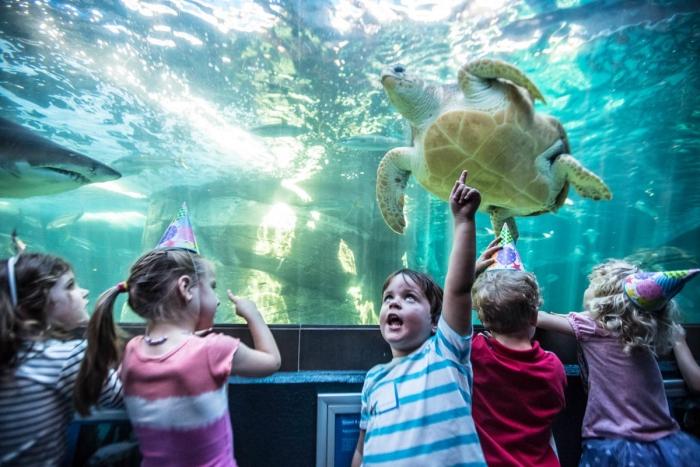 2. Two Ocean´s Aquarium en Ciudad del Cabo