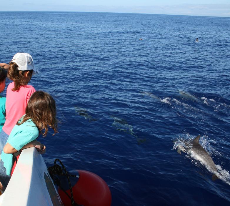 LaPalma_delfin niños-Consej.MAmb