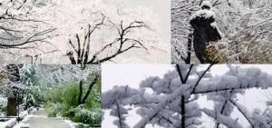 'El jardín en invierno' en el Jardín Botánico de Madrid @ Real Jardín Botánico de Madrid | Madrid | Comunidad de Madrid | España