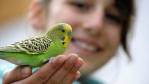 Taller infantil de aves @ Observatorio del Cambio Climatico