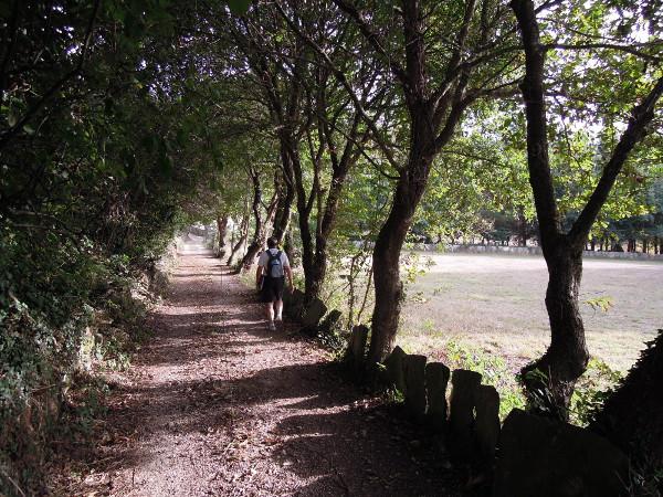 ruta-camin%cc%83o-do-min%cc%83o-pola-parroquia-de-robra-7