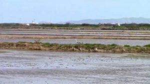 Un paseo por el arrozal @ Carretera CV-515 | Albalat de la Ribera | Comunidad Valenciana | España