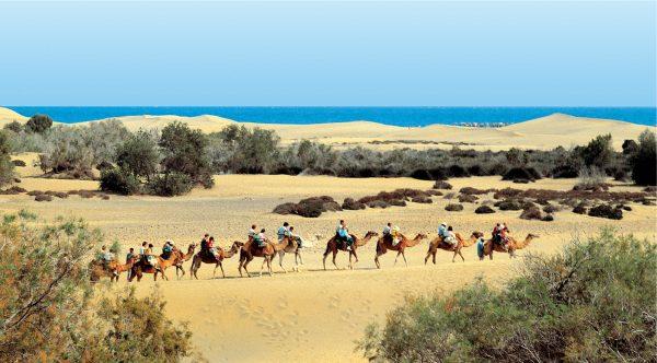 camellos e1555095176822 Гран   Канария: место отличного отдыха для всей семьи